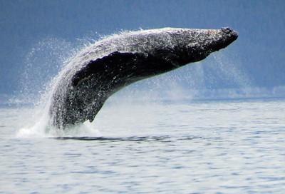 Alaska Cruise 2012 on the Millennium