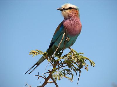 Kruger National Park, South Africa - 2007