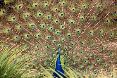 San Diego Zoo-LaJolla Cove - 2011